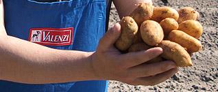 Kartoffelbauer